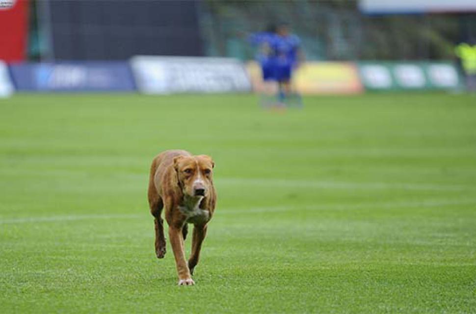 Y eso ocurrió en el partido entre Independiente del Valle y Delfín de  Manta 2504ea44691a6